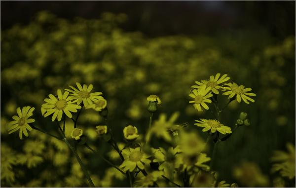 بوی بهار 3