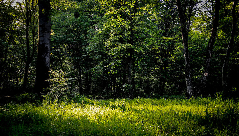 استان گلستان - جنگل دلند