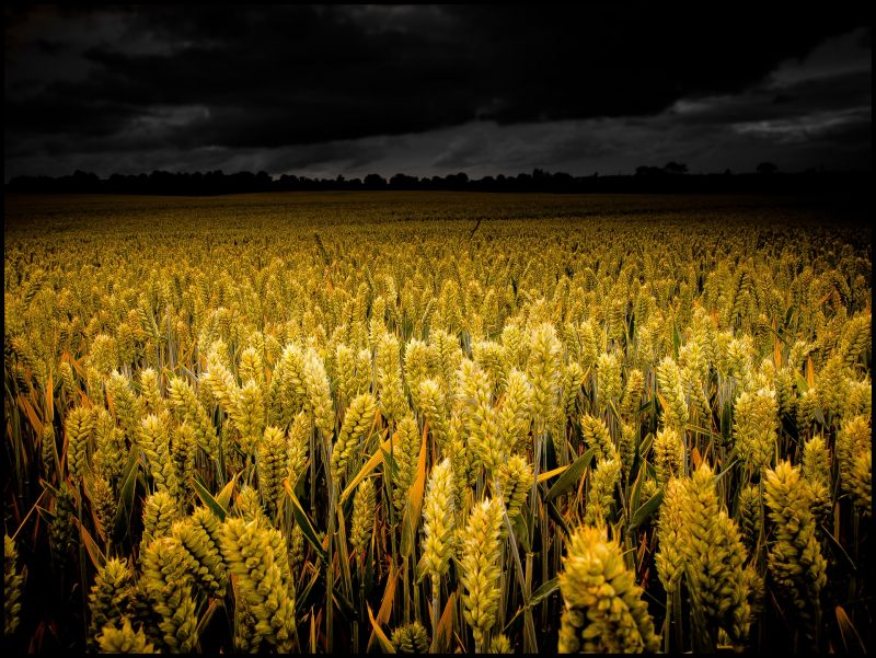 Fields Of Gold #2