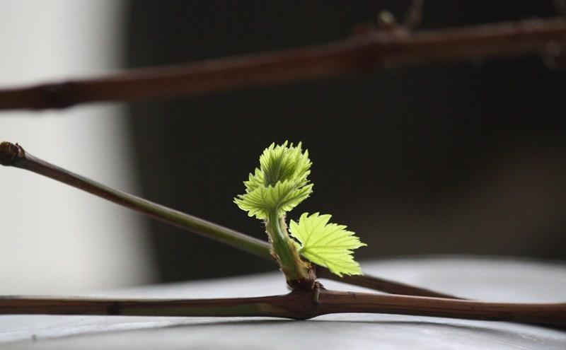 بهار...