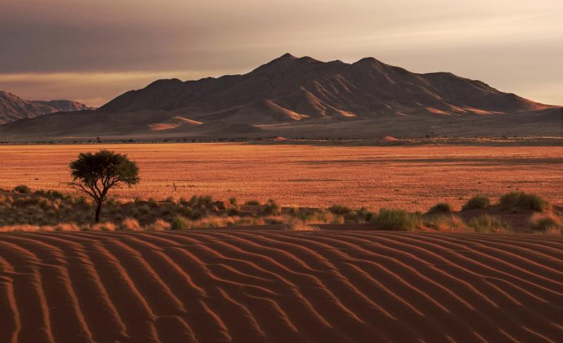 Grassland in Namibian Desert