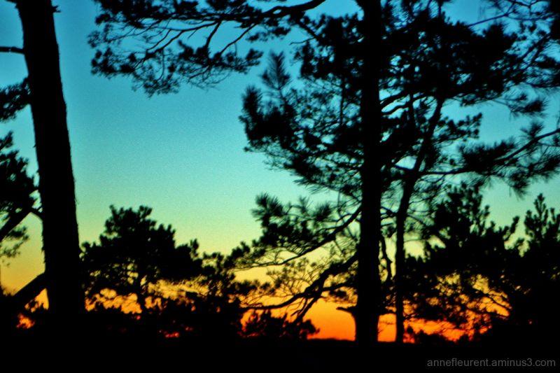 vent du soir dans les sylvestres