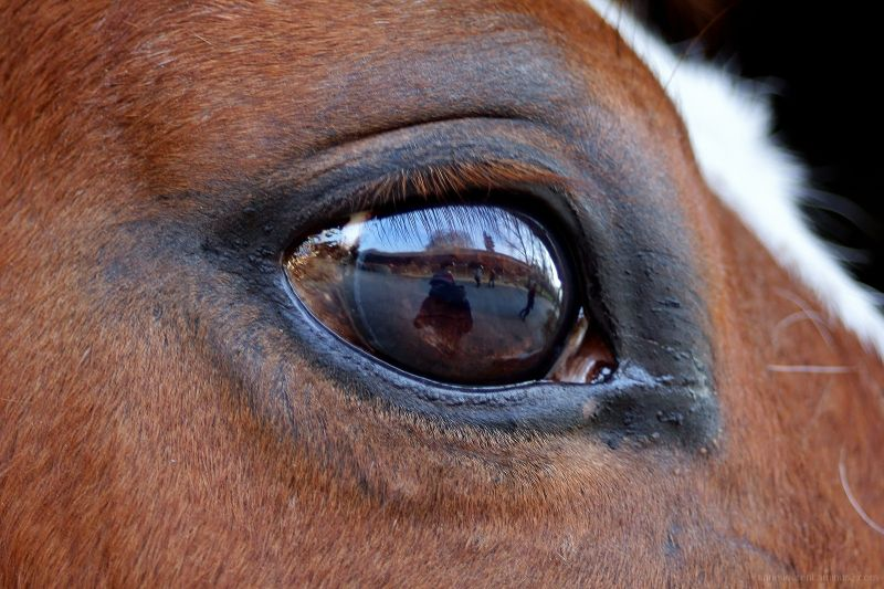 what's in a horse's mind ?