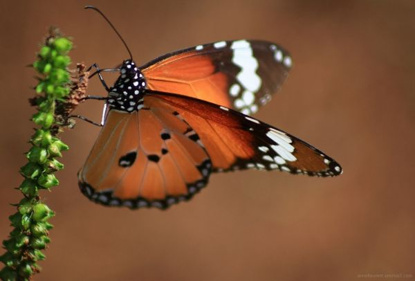 papillon orange comme l'espoir