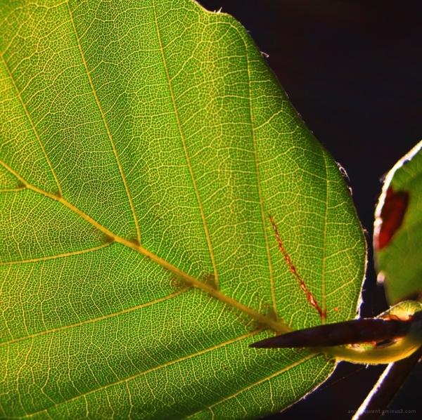chlorophylle d'automne