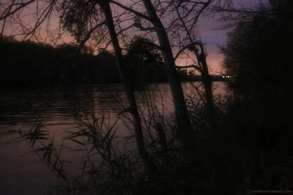 billebaude nocturne en bord de Seine IV