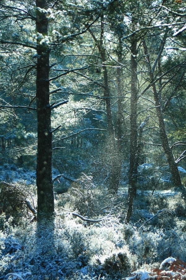 lucioles de neige