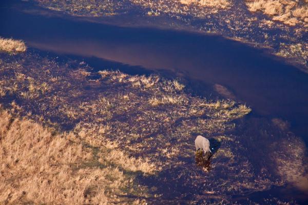 Okavango Swamps from above.