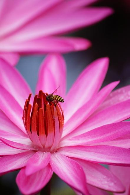 Bee @ flowerz