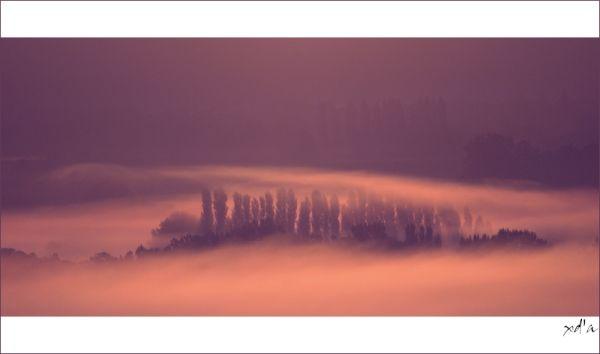 Sous la brume