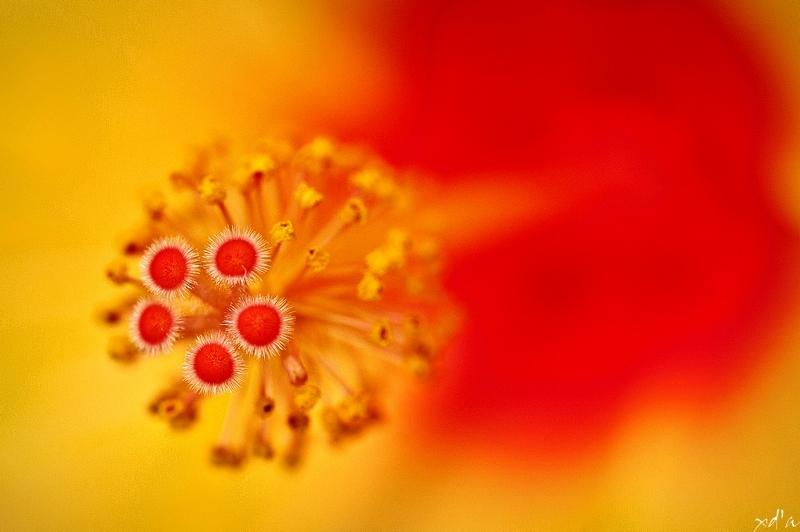 Voyage dans une fleur