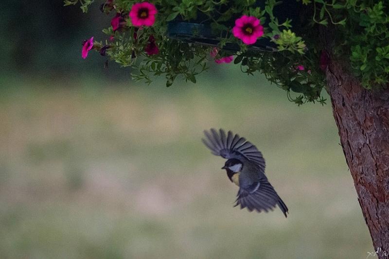 Oiseau... vole !