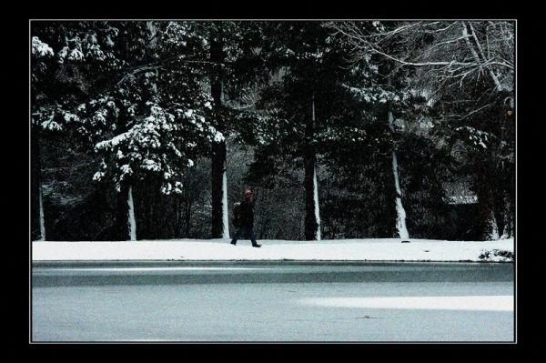 Un singe en hiver