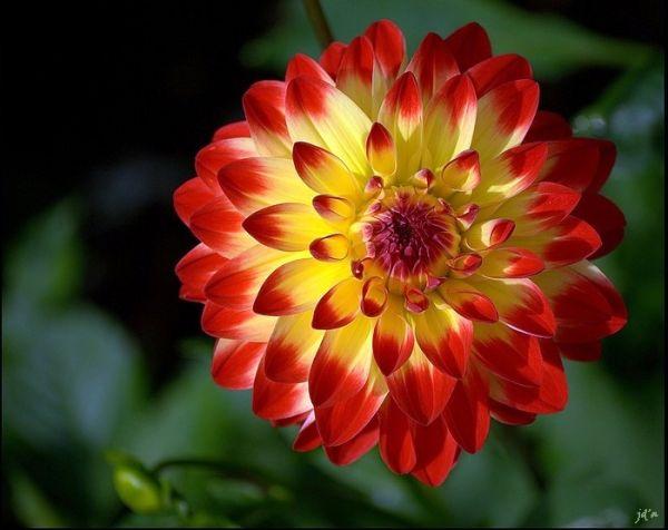 fleur en lumière