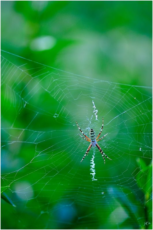 Une araignée dans sa toile