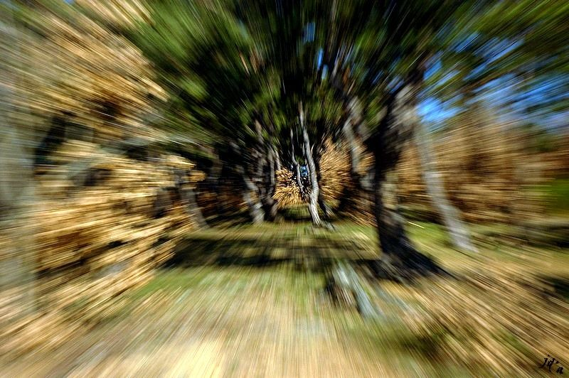 Un zooming dans la forêt