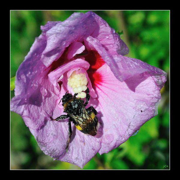 Un insecte butine une fleur