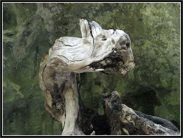 La gueule de bois, Vissec, Languedoc-Roussillon