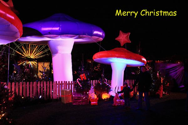 Les champignons de Noël