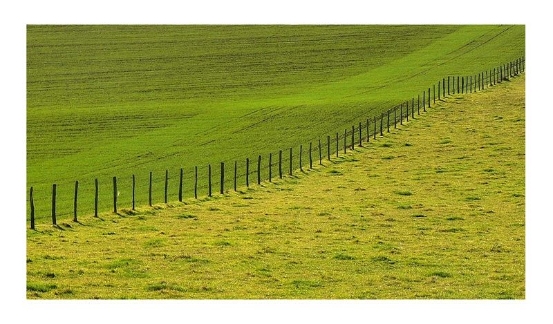 fence in a green land