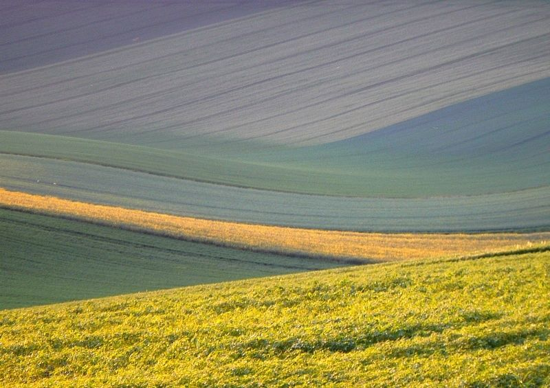 field lines of Champagne-Ardenne