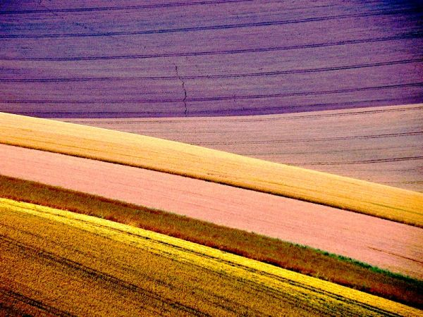 fields abstract
