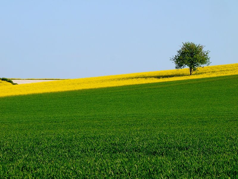 fields champagne-ardenne france