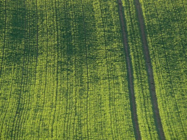 tractor track on a green field