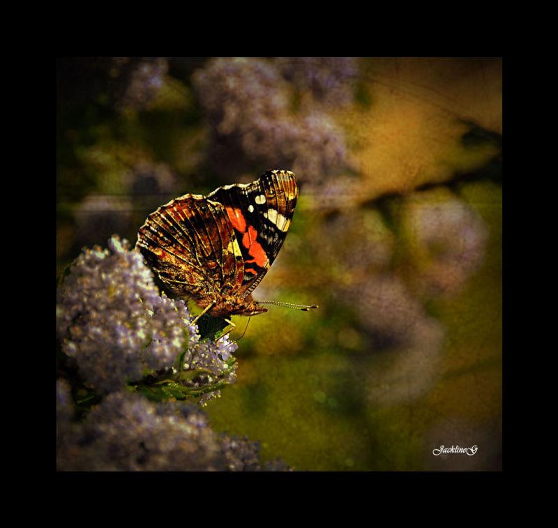 Le papillon ...