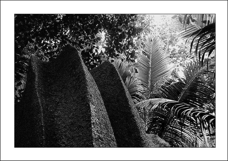 Seychelles de pierre et de palme