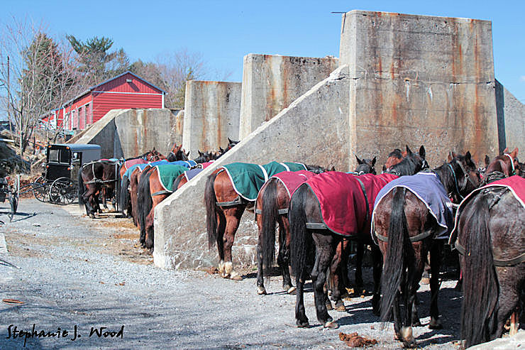 Mud Sale - Horse Parking