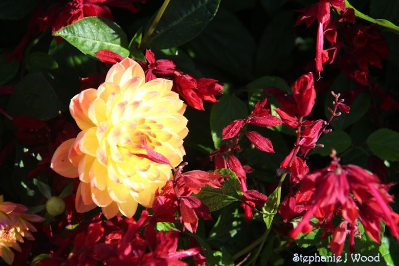 Yellow & Red Flowers