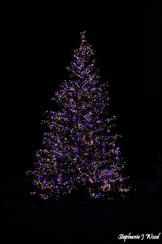 Christmas at Longwood Gardens by night 2