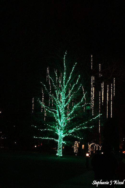 Christmas by night at Longwood Gardens