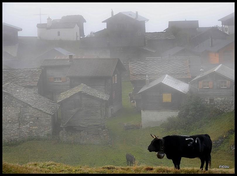 Finnu Valais Suisse