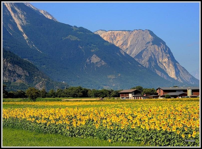 Roroge Valais Suisse