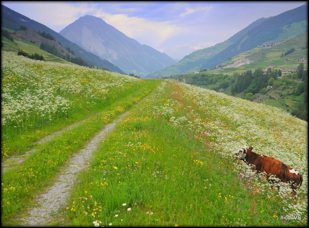 Suisse Valais Liddes