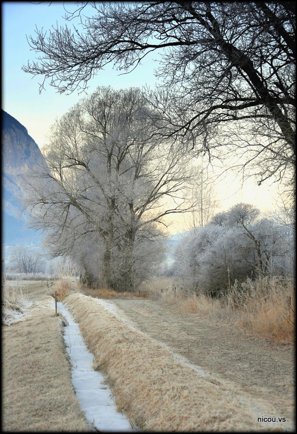 Suisse Valais Agarn