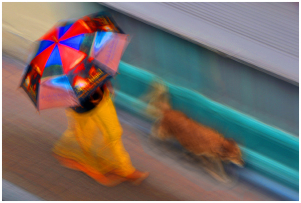 Walking the dog under the rain