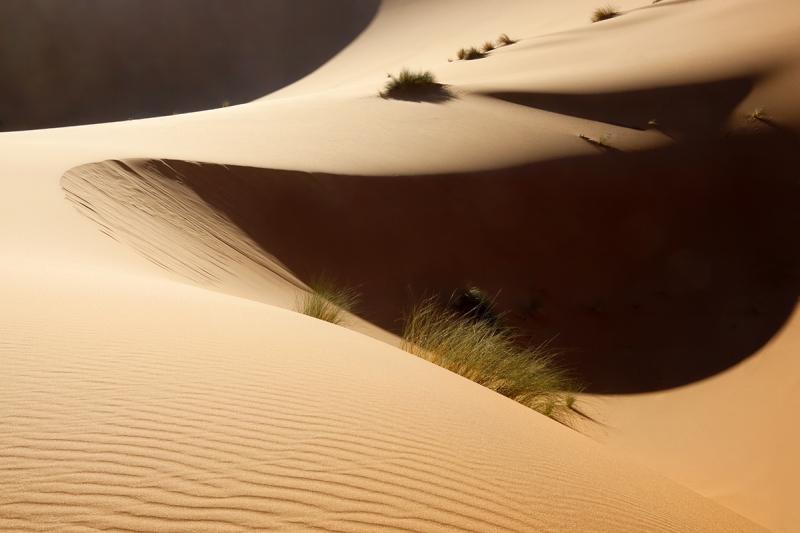 Sahara desert sand dunes