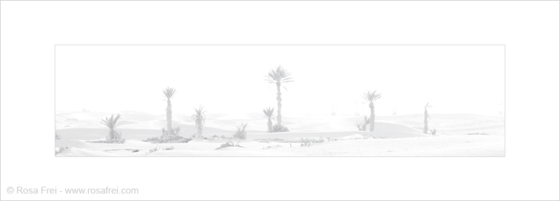 Fine Art - Sahara desert with palms