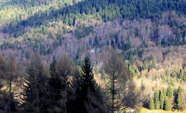 une forêt montagnarde et hivernale