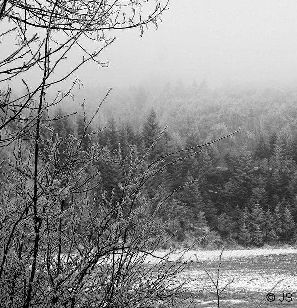 dans le brouillard givrant