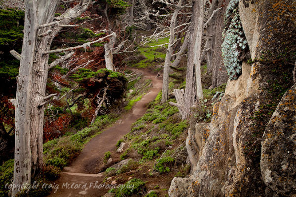 Monterey Cypress Trail