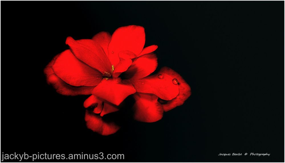 Red is red - Rouge est Rouge