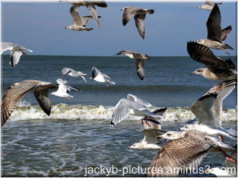 Oiseaux de Mer  -  Seabirds
