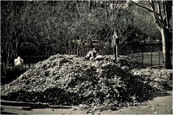 Les feuilles des champs urbains