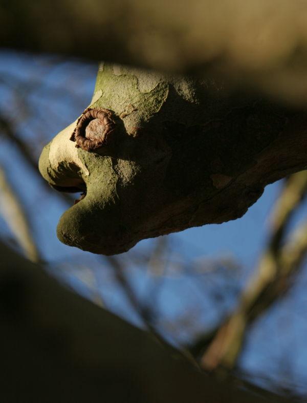 Les « poissons » poussent dans les arbres ?