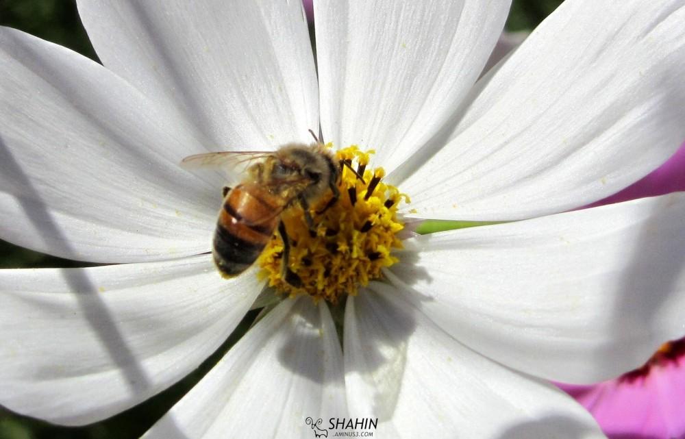Flower 03