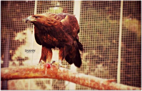Eagle 02